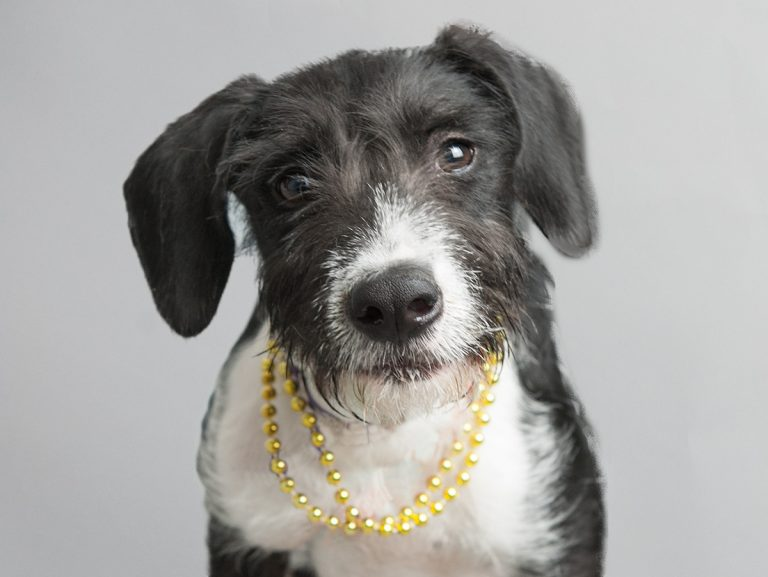 Adoptable dog with necklace