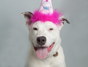 Adoptable dog with birthday hat