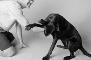 Laborador Retriever playing with owner