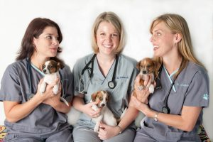 Veterinarians with puppies