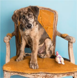 Dog in orange chair in studio