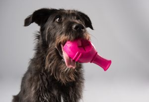Dog with toy in its mouth